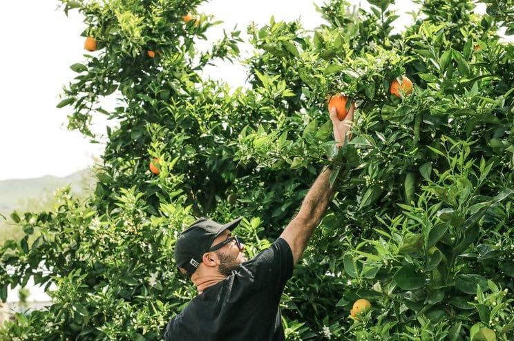 fruit picking ask melbourne