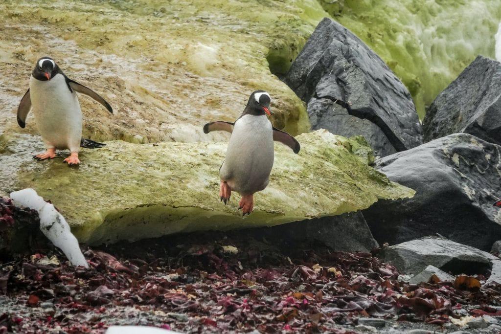 Phillip Island's Penguin Parade melbourne