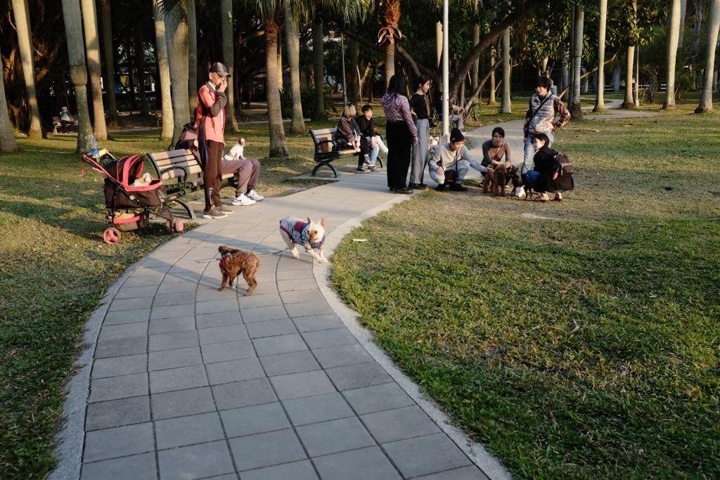 Melbourne Dog Park