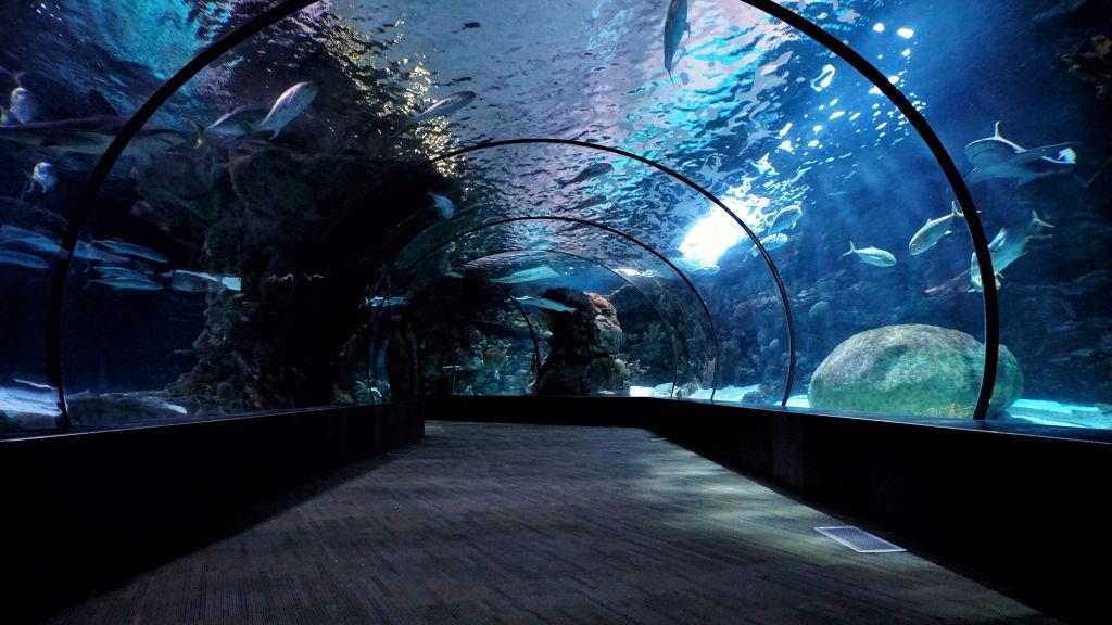 Melbourne Aquarium sealife